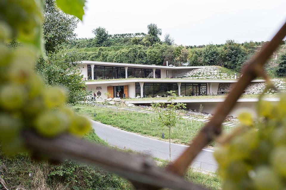 Wine-growing estate Franz Keller - Speidel stainless steel tanks